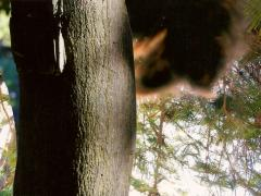 """""""Sobre el paisaje #31"""", collage fotográfico, 10 x 15 cm, 2010"""